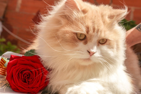 pet-friendly flowers, cat with roses