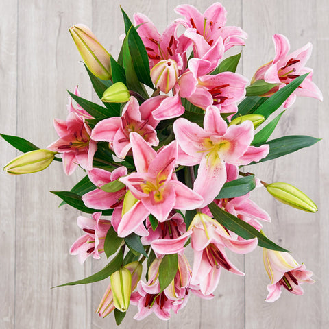 pink starfighter lilies breast cancer flowers