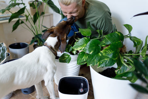 pet friendly plants and flowers