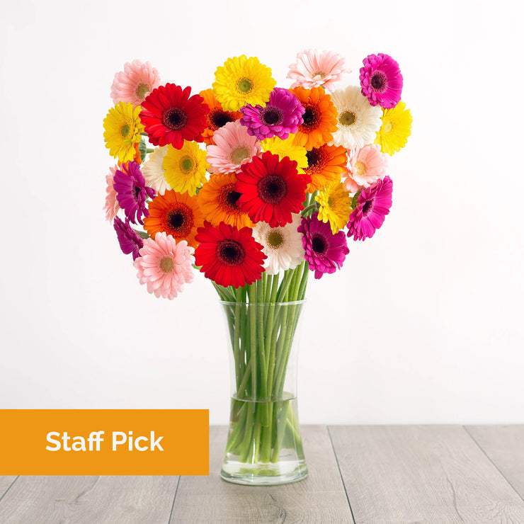 Colorful Gerbera Daisies