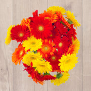 Fall Seasonal Gerbera Daisies