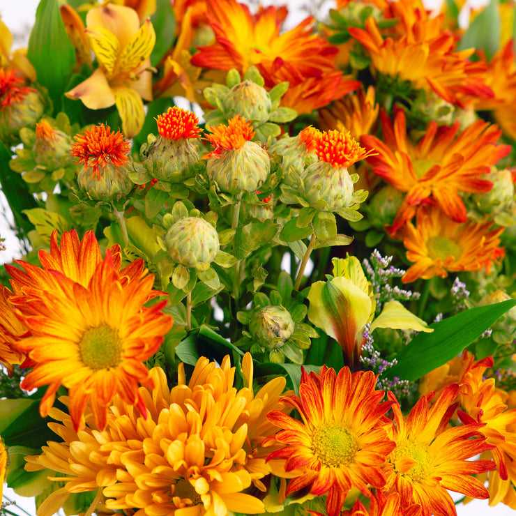 Feast Fall Seasonal Mixed Bouquet