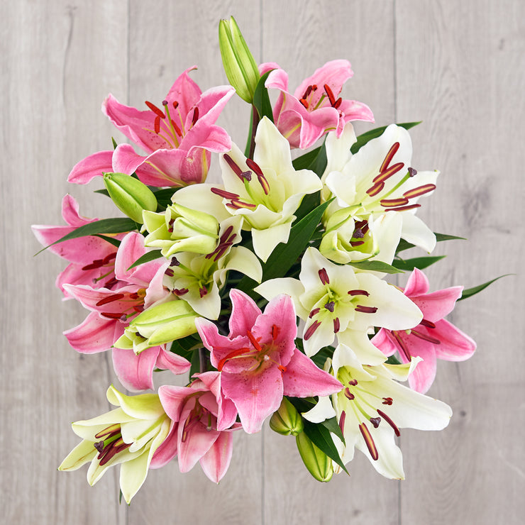 White and Pink Lilies