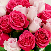 Hot and Light Pink Roses