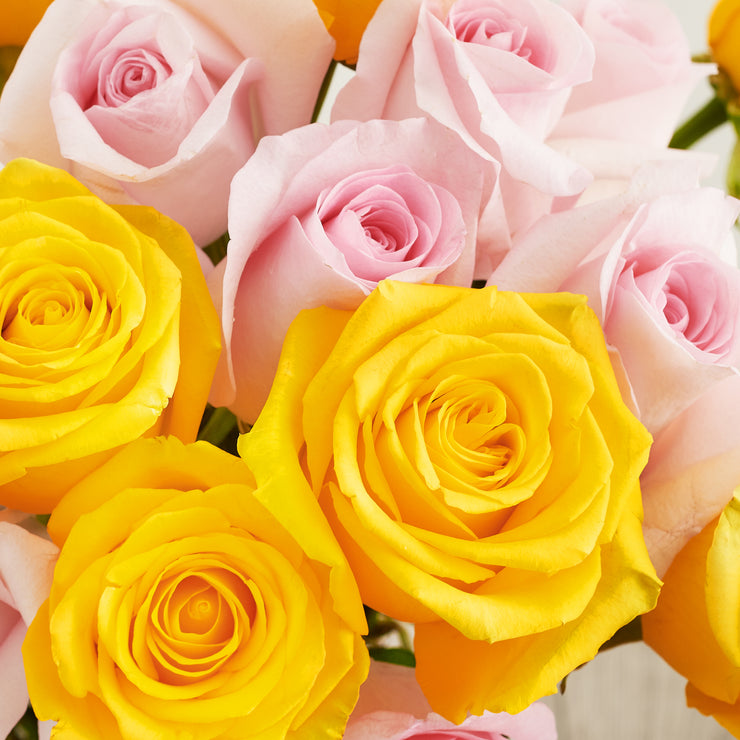 Yellow and Pink Roses