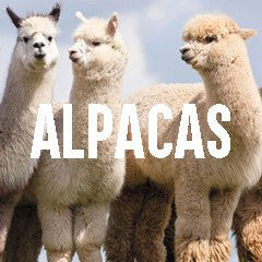 Alpaca Themed Animal Jewelry and Products