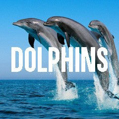 Dolphin Themed Animal Jewelry and Products