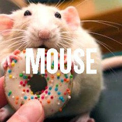 Mouse Themed Animal Jewelry and Products