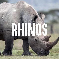 Rhinoceros Rhino Inspired Jewelry and Products