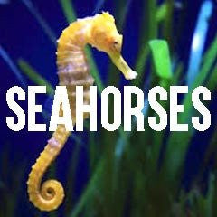 Seahorse Inspired Marine Life Jewelry and Products