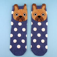 Cute English Bulldog Face With Polka Dots Pattern Cotton Socks in Blue