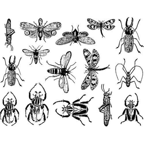 Decal Insects Black