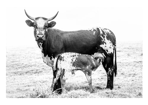 NGUNI MOTHER & CALF - anton-crone-photography
