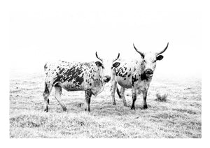 NGUNI PAIR - anton-crone-photography