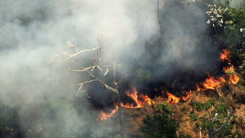 What the Amazon rainforest fires mean for animals?