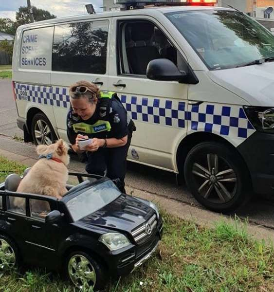 Dog Driving Around In A Tiny Car Has Run-In With Police