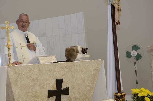 Stray Cat Moves Into Church And Humbly Accepts The Worshippers' Praise