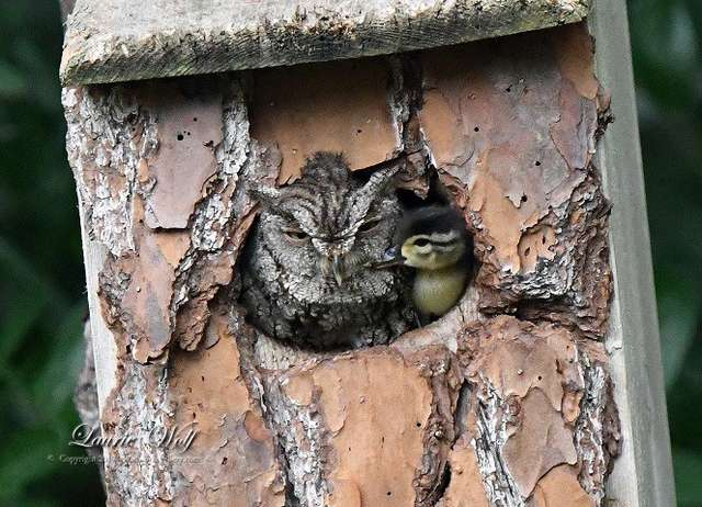 Unlikely 'Mom' Watches Over Duck Egg Until He Safely Hatches