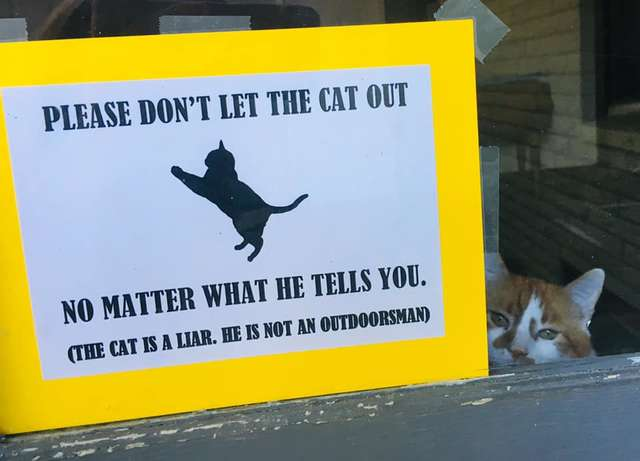 Sneaky Cat Has Tried To Escape So Many Times His Parents Put Up A Sign