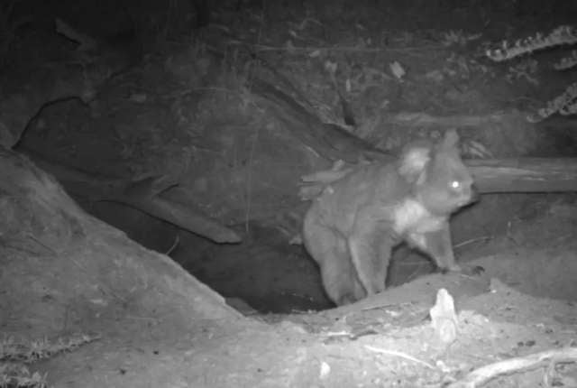 Hidden Camera Catches 3 Different Animals Coming Out Of Same Little Nest
