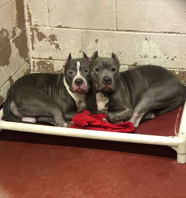 Shelter Overflowing With Dogs Has No Space Left