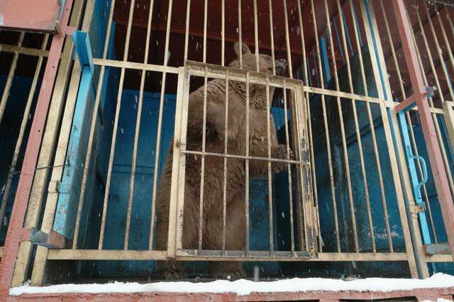 Lonely Bear Locked In Tiny Cage Always Hoped For A Better Life