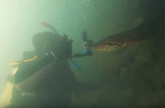 Diver Comes Face-To-Face With The Largest Snake In The World