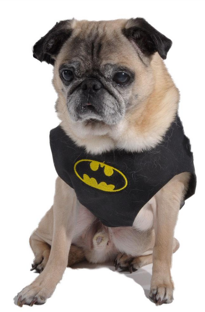 Batman Harness - Luxurious Paws
