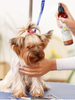All-Natural Dog Odor Eliminator Freshening and Shining Spray with Aromatherapy - Luxurious Paws