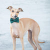 Grosse Pointe Collar - Luxurious Paws