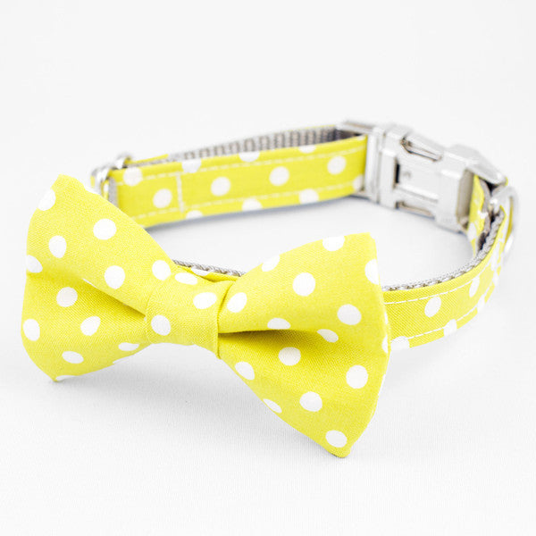 Gold Coast Collar - Luxurious Paws