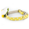 Gold Coast Flower Collar - Luxurious Paws