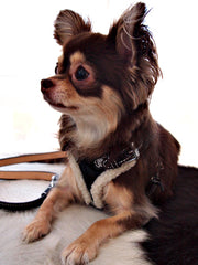 Black Patent Dog Harness - Luxurious Paws