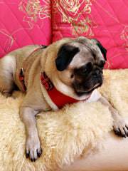 Cherry Red Dog Harness - Luxurious Paws