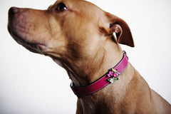 Birdie Dog Collar - Luxurious Paws