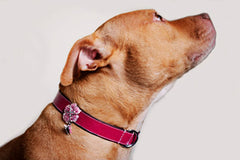 Rose Collar - Luxurious Paws