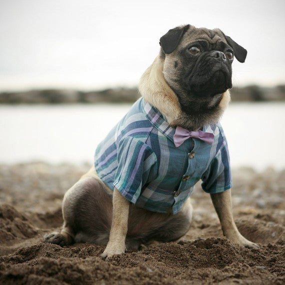 The Arbour Dog Shirt (bow tie sold separately) - Luxurious Paws