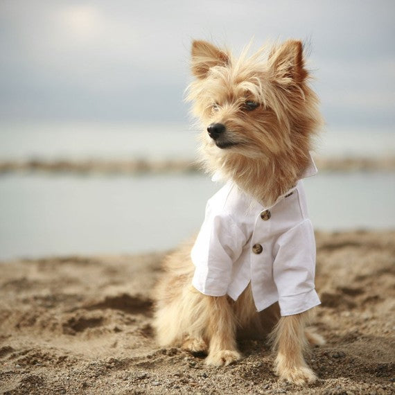 The Club Dog Shirt - Luxurious Paws