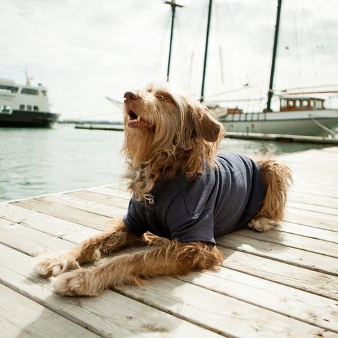 First Mate Dog Sweatshirt