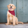 Lake Tahoe Bandana - Luxurious Paws