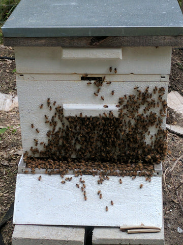 bees outside their hive when it is hot out