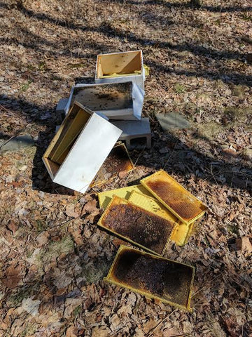 beehive destroyed by bears