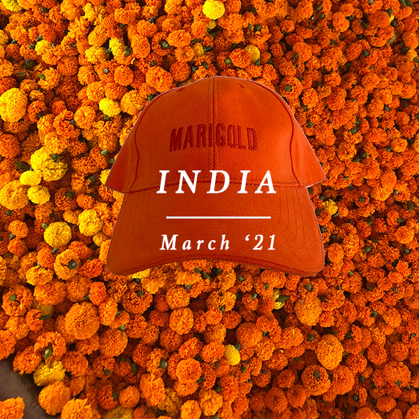 MARIGOLD LOVERS IN INDIA! 13 - 21 MARCH 2021