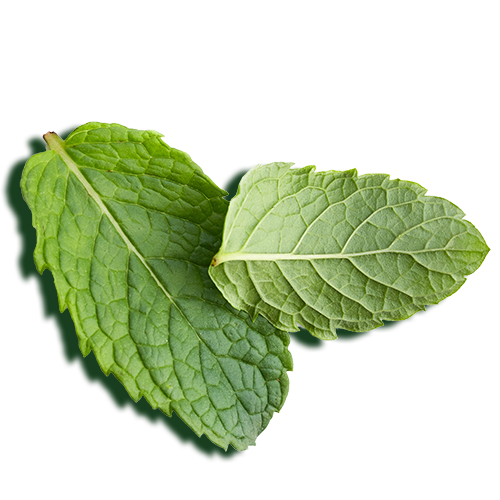 Peppermint oil leaves
