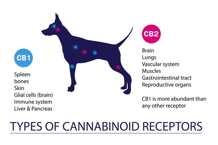 Why You Should Consider Giving Pets CBD Treats