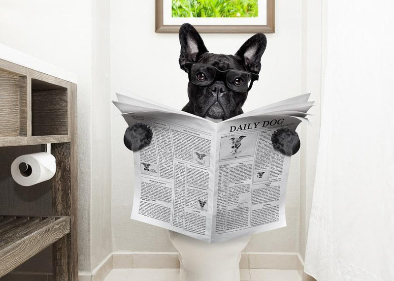Dog reading a paper