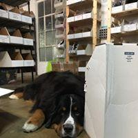 Beau in the Coeur Office
