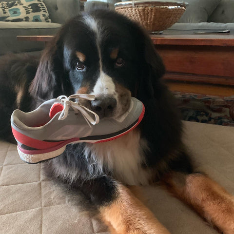 Dog with Running Shoe