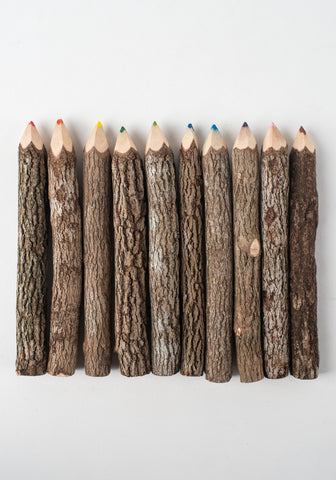 Tree Branch Colored Pencils