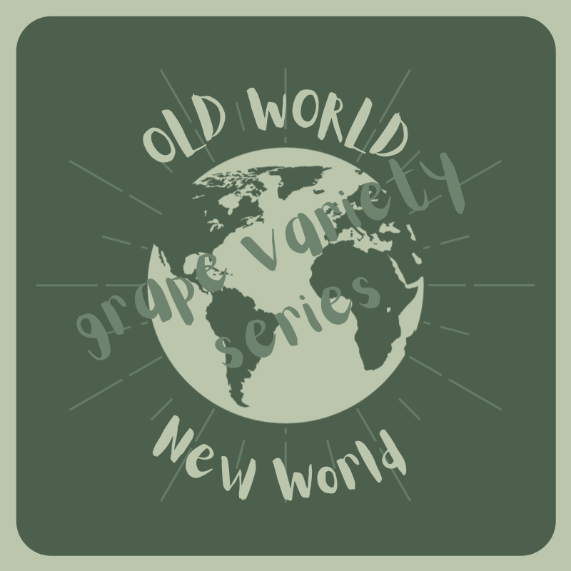 Old World New World Grape Variety Virtual Class